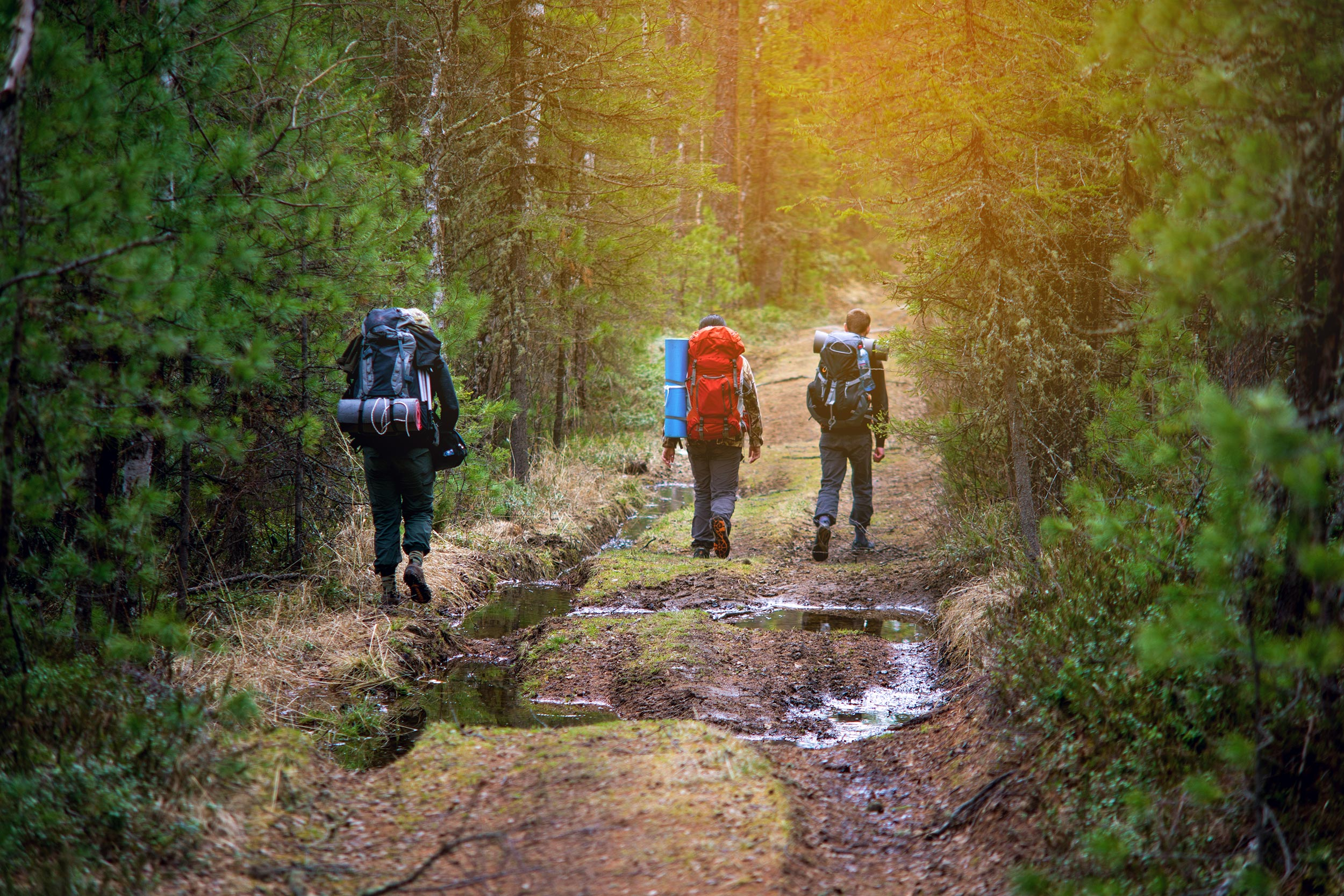 People with backpacks hike through the woods