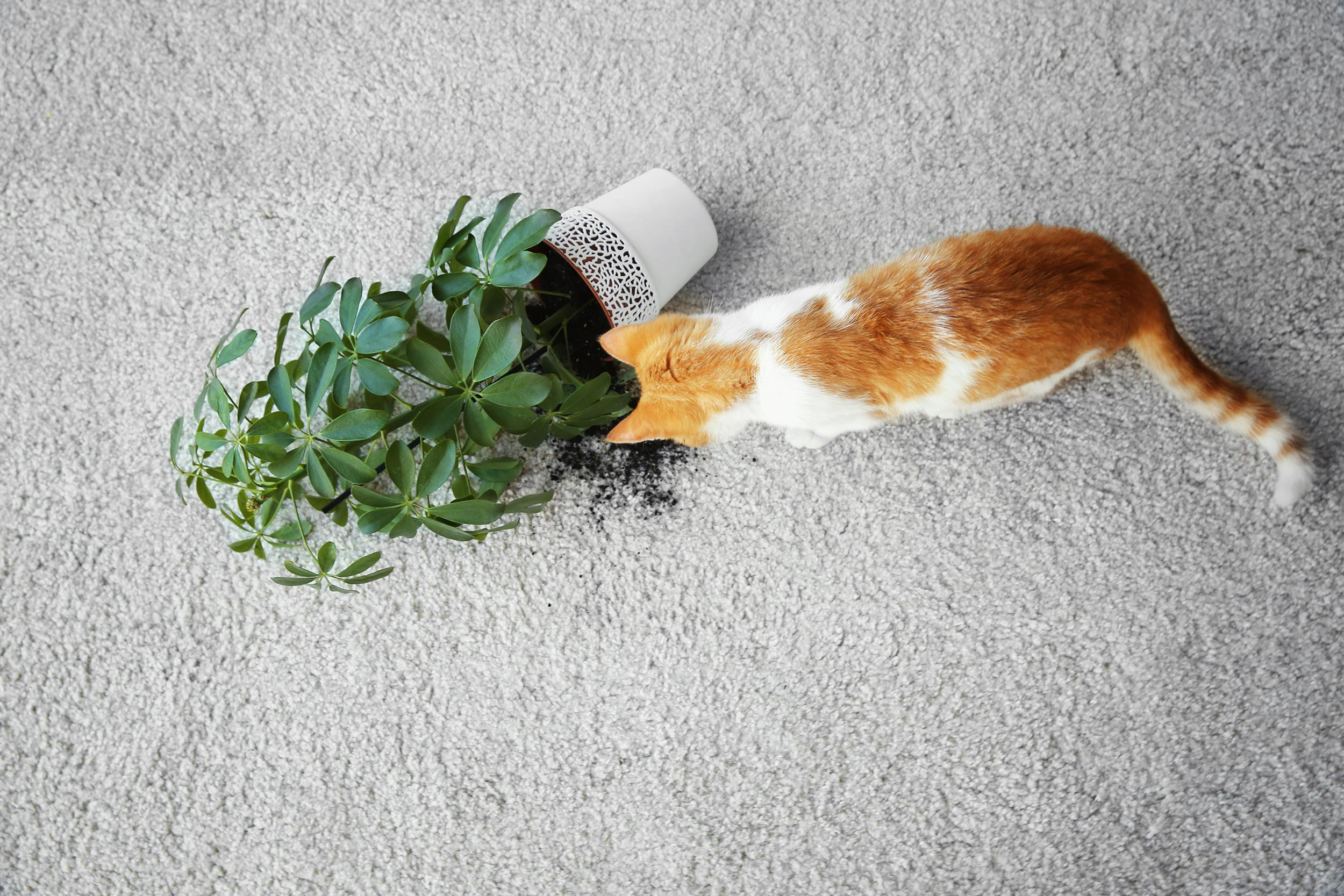 A cat next to a broken jar with a plant on the ground