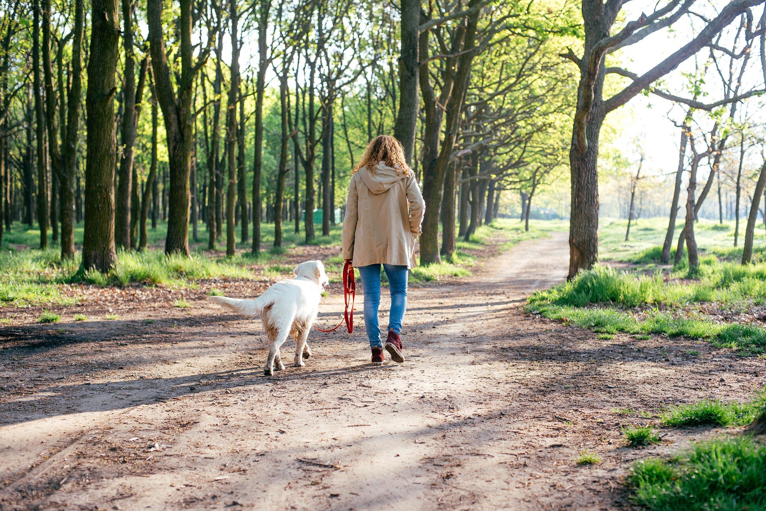 Djevojka šeće s bijelim psom po šumi